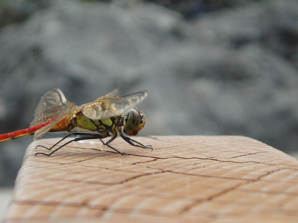 Dragonfly, Insects, Wing, Park, Autumn, Forest