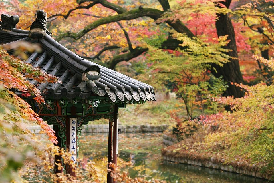Nature, Wood, Autumn, Outdoors, Fall