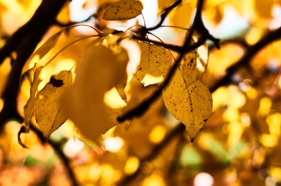 Leaves, Autumn, Yellow, Foliage