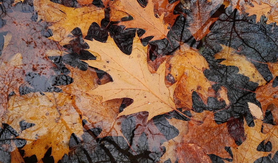 Autumn, Leaves, Indian Summer, Yellow, Golden
