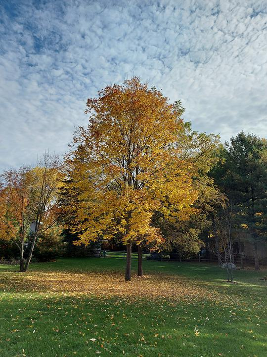 Trees, Fall, Nature, Autumn, Yellow Leaves, Leaves
