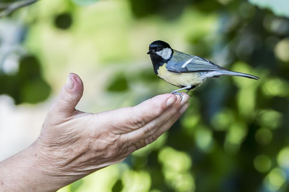 Bird, Ave, Animals, Nature, Fauna, Animal, Cheeky, Hand