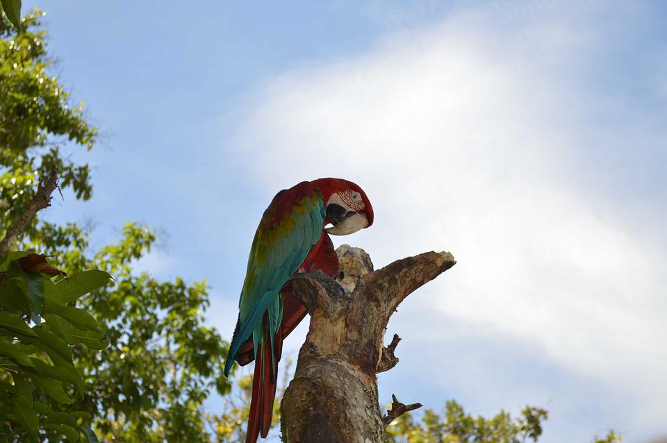 Ave, Flag, Macaw, Guacamayas, San Carlos