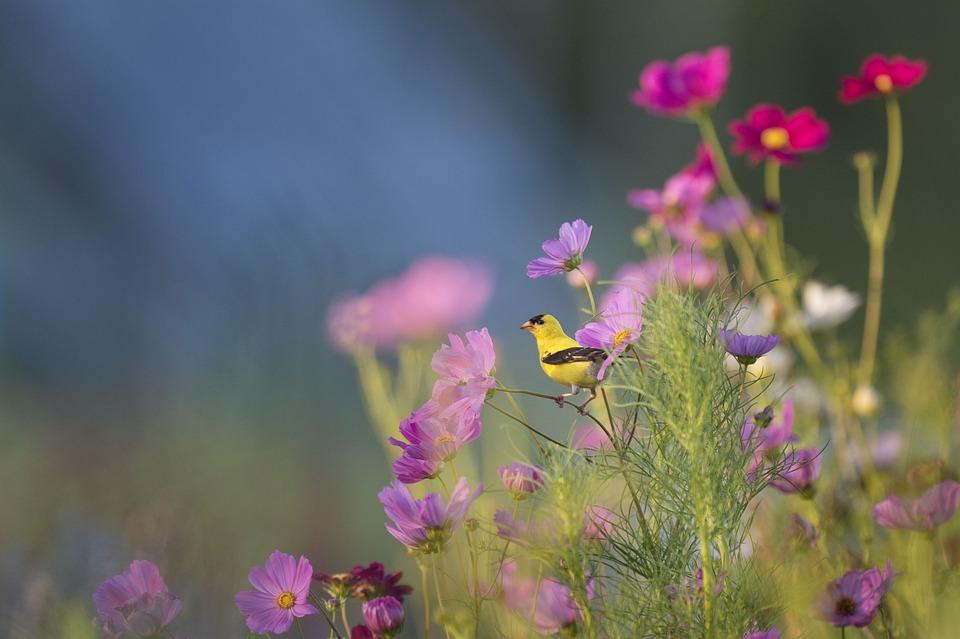 Flowers, Bird, Field, Meadow, Perched Bird, Ave, Avian