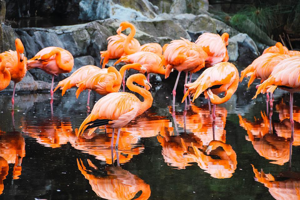Flemish, Park, Zoo, Nature, Wild, Ave, Fauna, Pond