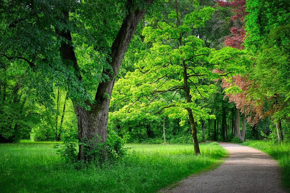Away, Forest, Forest Path, Nature, Path, Avenue, Trail