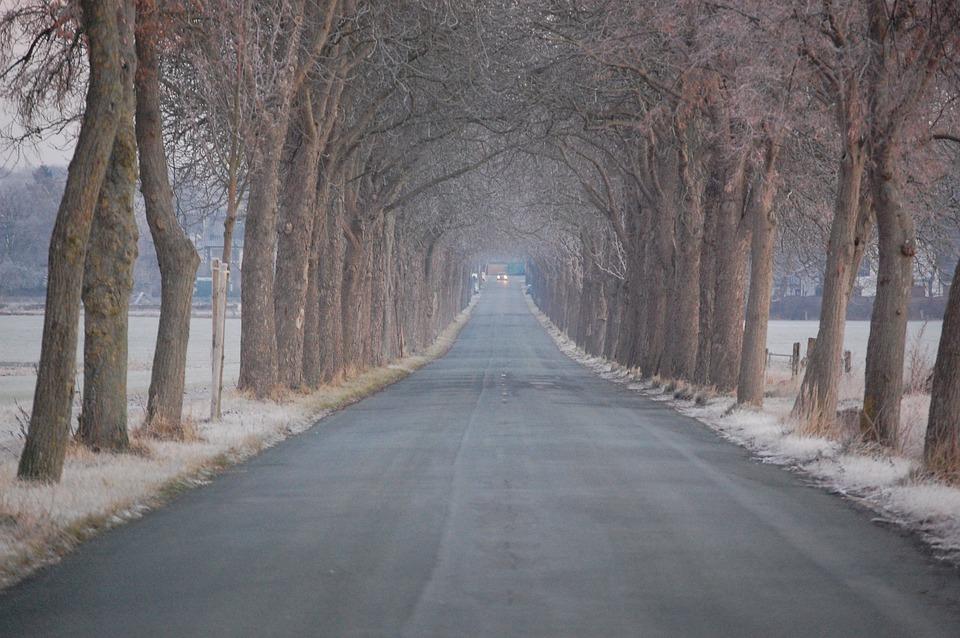 Winter, Icy, Avenue, Herzebrock, Brock, Chestnut