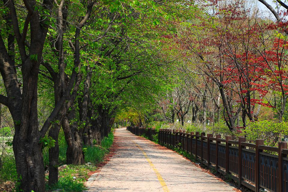 Early Summer, Avenue, Gil, Healing, Landscape, Wood
