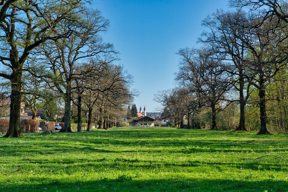 Spring, Panorama, Trees, Avenue, Meadow, Idyllic