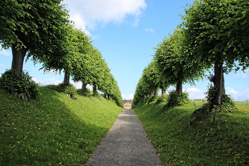 Castle, Avenue, Trees, Nature, Tree Lined Avenue