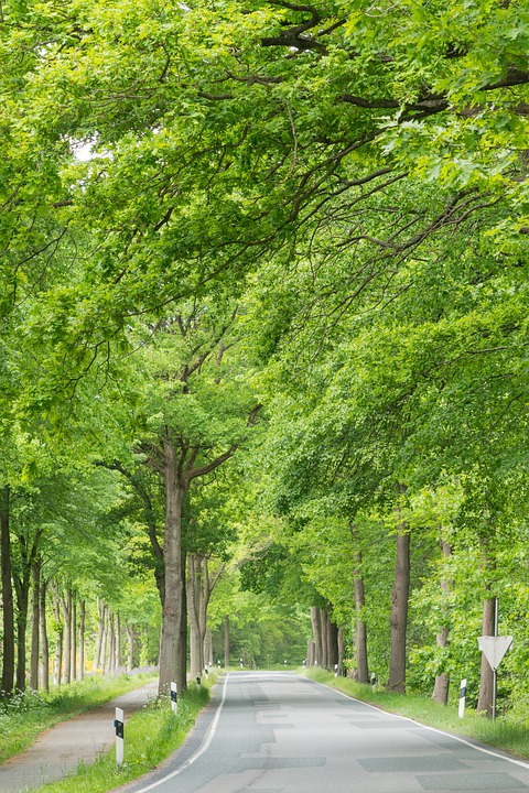 Avenue, Road, Trees, Forest, Nature, Away