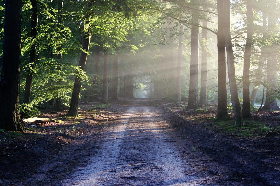Avenue, Trees, Path, Sunbeams, Sunrays, Woods