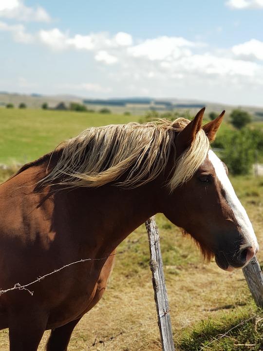 Horse, Fields, Aveyron, Field, Nature, Landscape, Grass