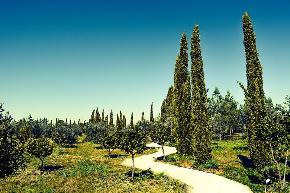 Cyprus, Avgorou, Cypress, Cyherbia