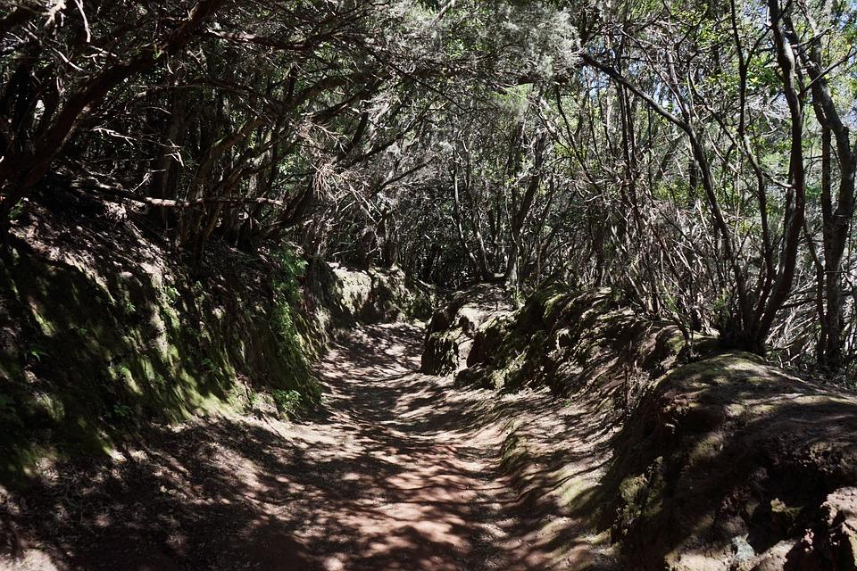 Trail, Away, Path, Tenerife, Anaga Landschaftspark