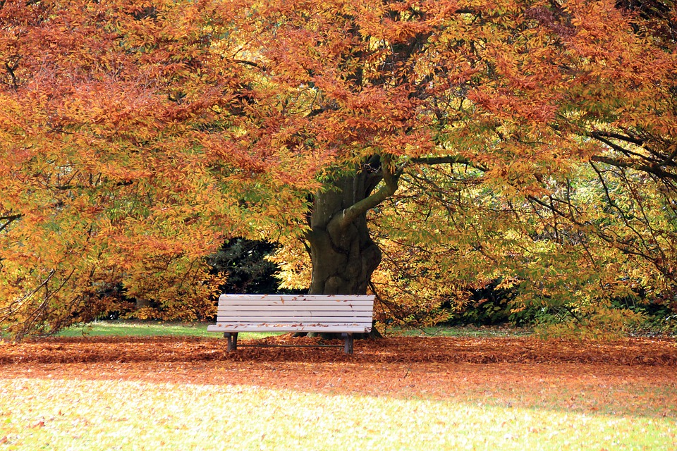 Autumn, Park, Leaves, Bank, Tree, Away, Bad Pyrmont