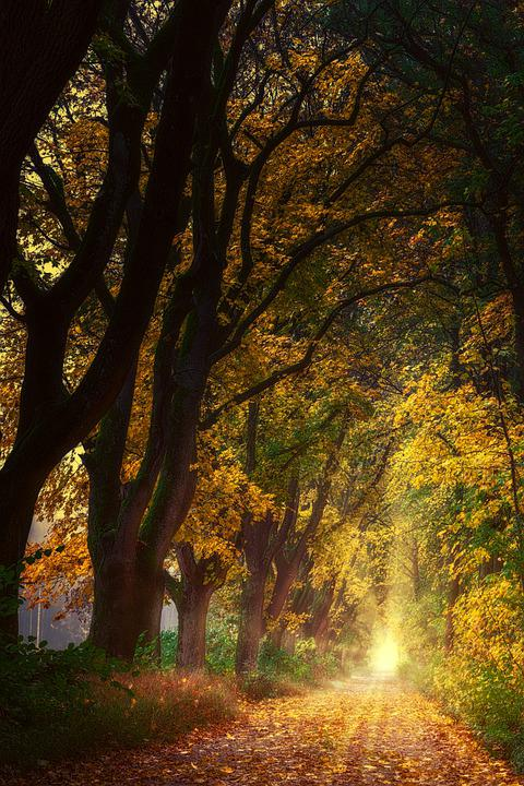 Hope, Nature, Forest, Away, Avenue, Trees, Light, Sun