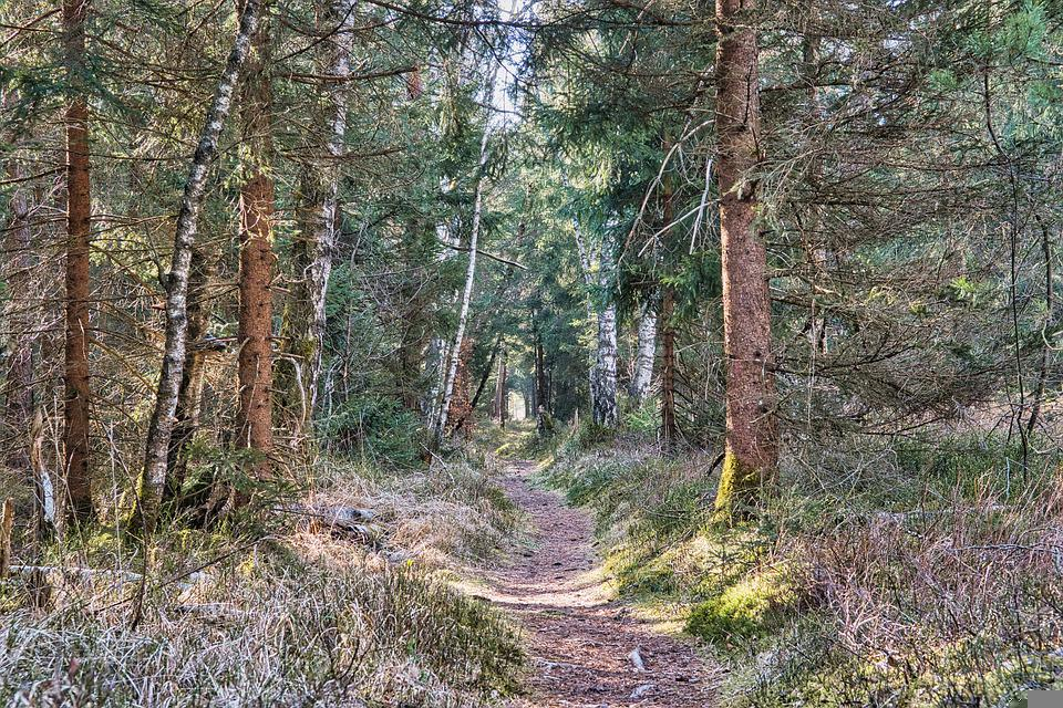 Forest, Away, Path, Trail, Nature Trail, Nature, Trees