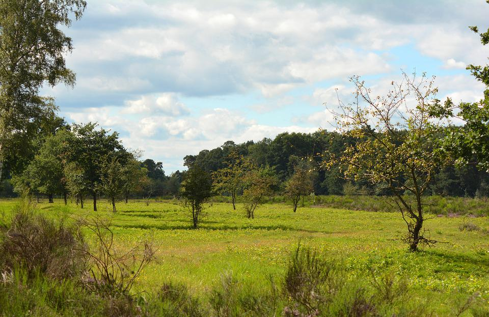 Heide, Heathland, Landscape, Heather, Nature, Away