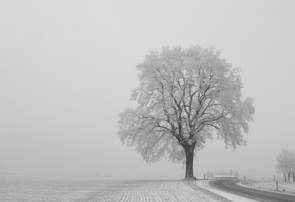 Tree, Winter, Individually, Landscape, Away, Wintry