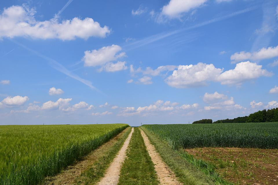 Lane, Agriculture, Field, Away, Nature, Dirt Track