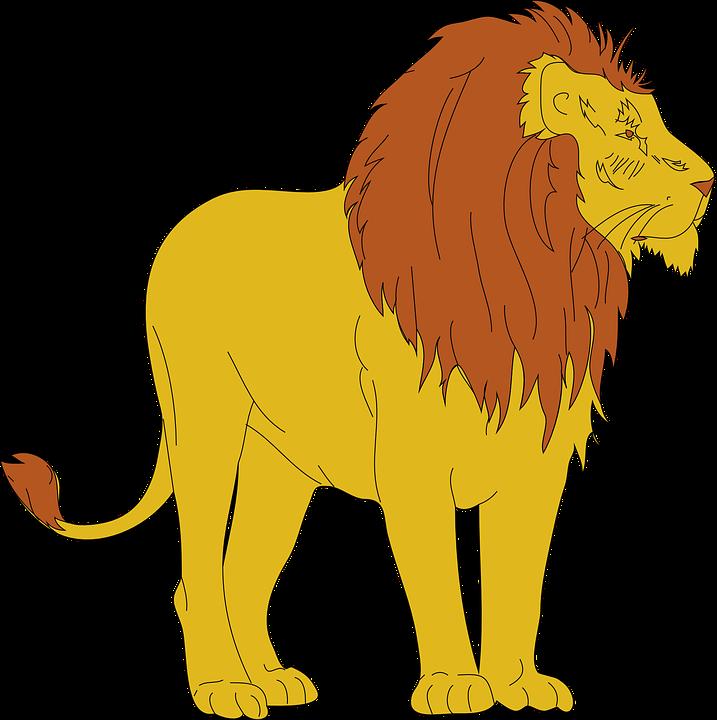Lion, Animal, Mammal, Standing, Looking, Away, Wildlife