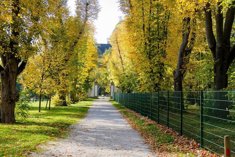 Avenue, Trees, Autumn, Tree Lined Avenue, Nature, Away