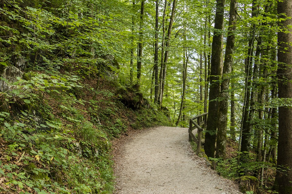 Free Photo Away Nature Forest Autumn Trees Forest Path