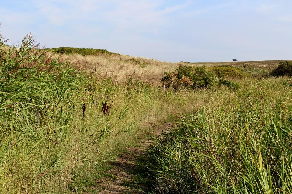 Langeoog, Away, Dune, Summer, Tourism, Coast, Panorama