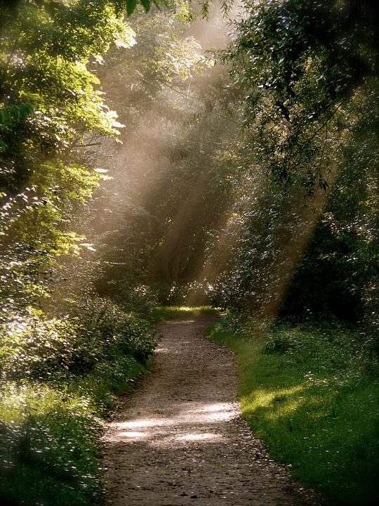 Forest Path, Mood, Park, Forest, Away, Sunbeam