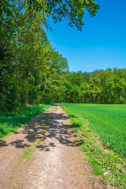 Nature, Away, Lane, Walk, Tree, Landscape, Summer, Leaf