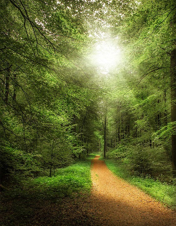 Forest Path, Forest, Away, Nature, Trees, Sunny, Summer