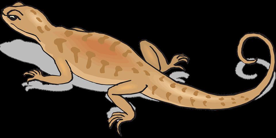 Brown, Shadow, Away, Salamander, Walking, Tail, Reptile