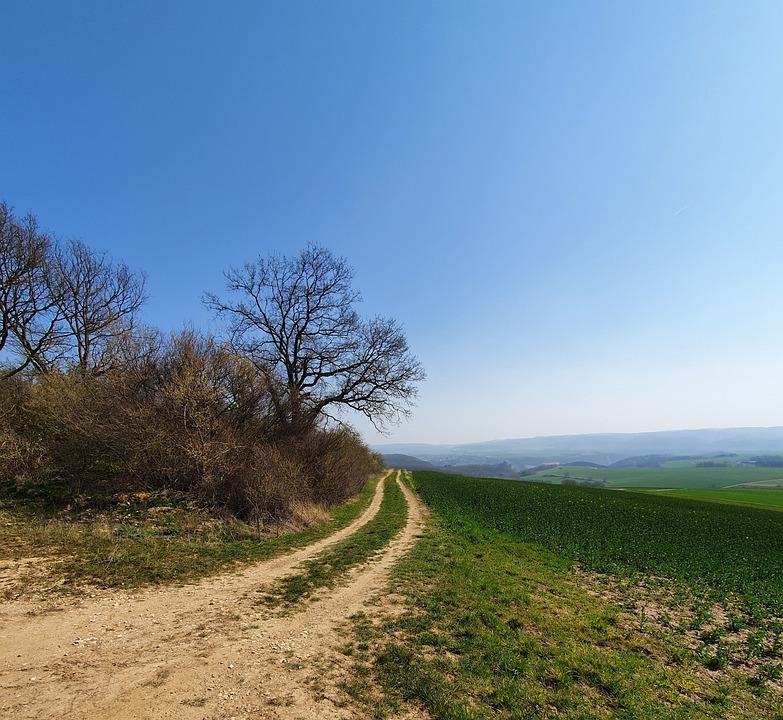 Lane, Nature, Away, Landscape, Meadow, Tree, Trail