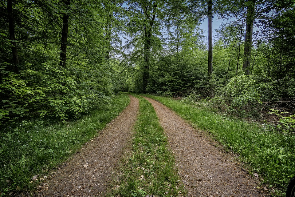Lane, Forest, Forest Path, Trees, Away, Landscape