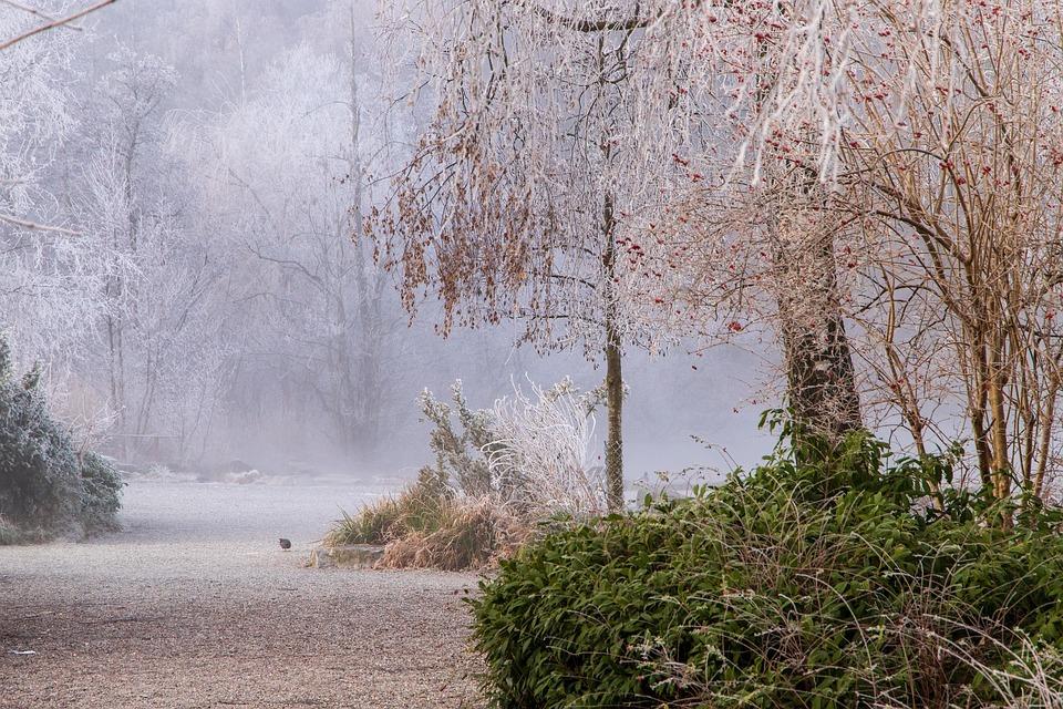 Ripe, Away, Winter, Cold, Gefrohren, Wintry, Tree