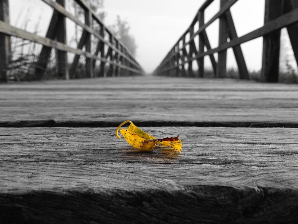 Leaf, Web, Black White, Yellow Sheet, Away, Infinity