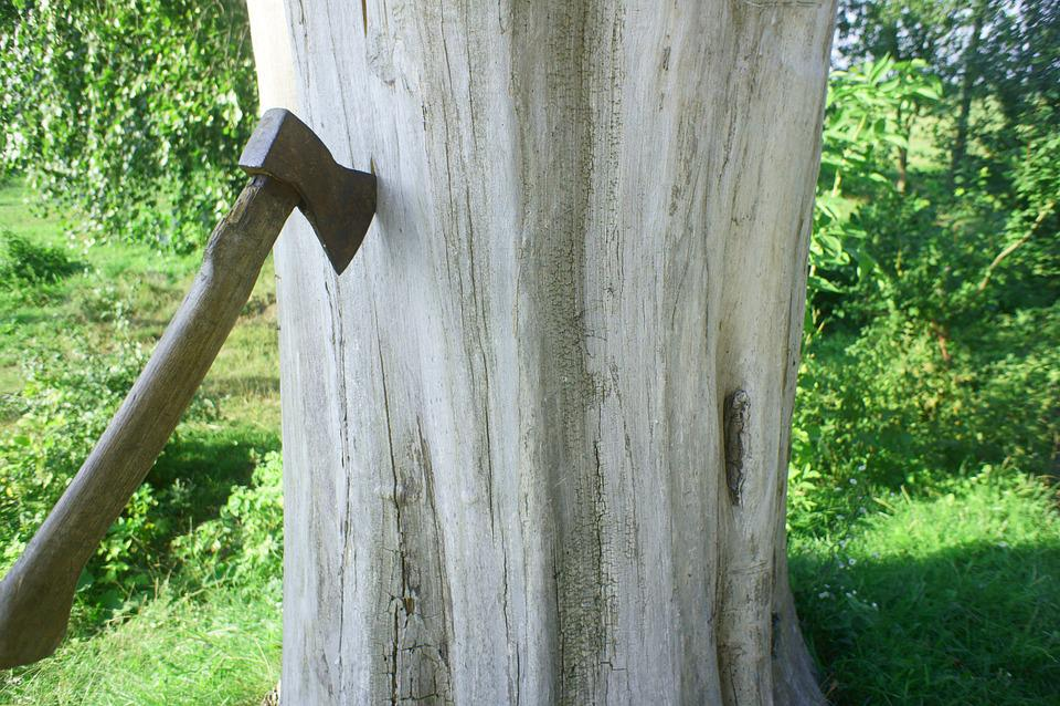 Axe, Tree, Dry Wood, Wood, Lumberjack