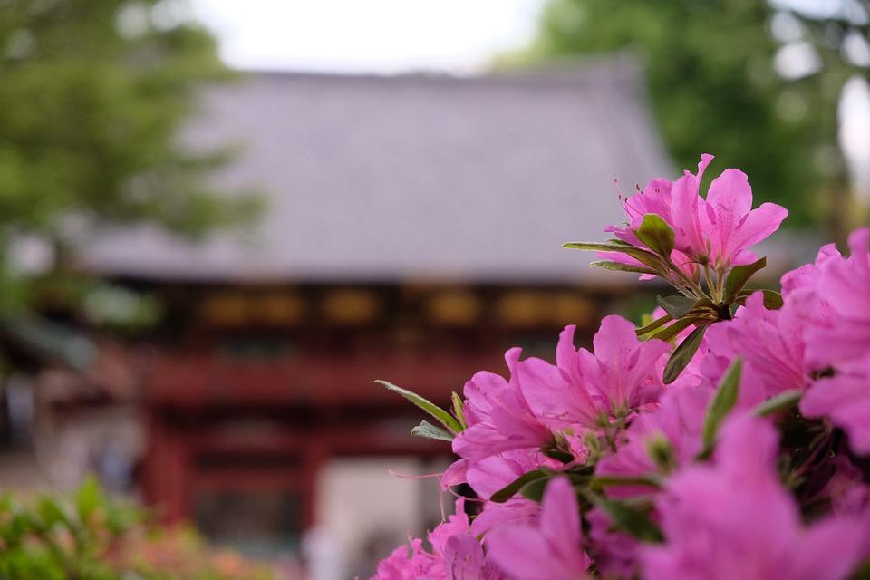 Flowers, Petals, Azalea, Blossom, Leaves, Foliage, Bush