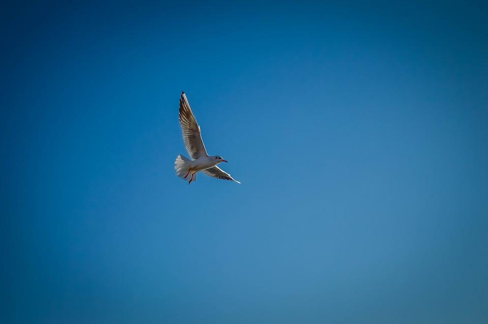 Autumn, Azov, Birds, Leaves, Park, Sea, Seagull, Sun