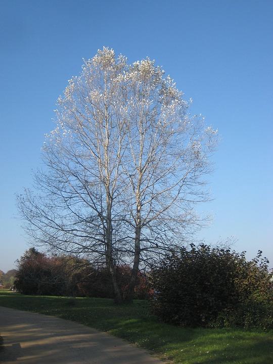 Tree, Autumn, Babelsberg