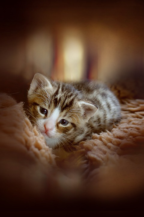 Free Photo Baby Cat Small Cats Cat Baby Animal Kitten Cute Max Pixel