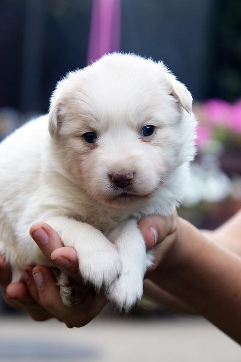 Cute, Small, Dog, Mammal, Pet, Baby, Puppy, Keep, Bear