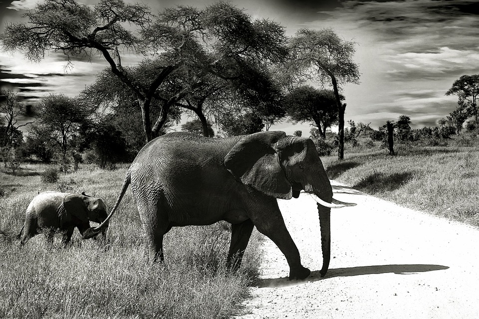 Elephant, Baby Elephant, Animal, Wilderness