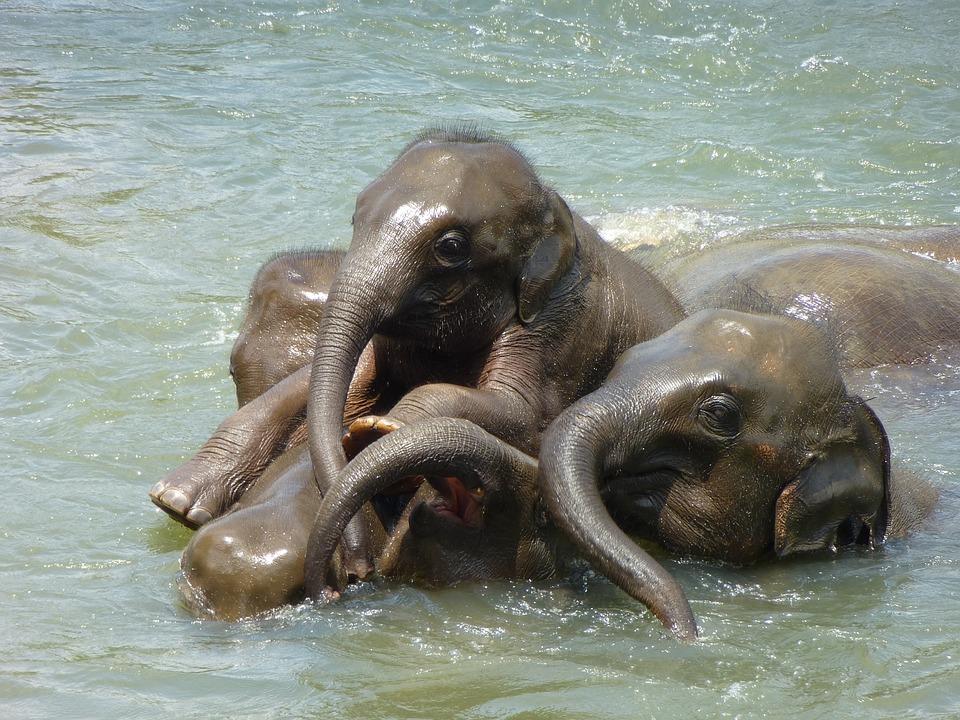Baby Elephant, Elephant, Elephant Family