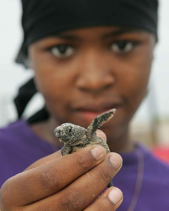 Turtle, Loggerhead, Baby, Girl, American, Afro, Women