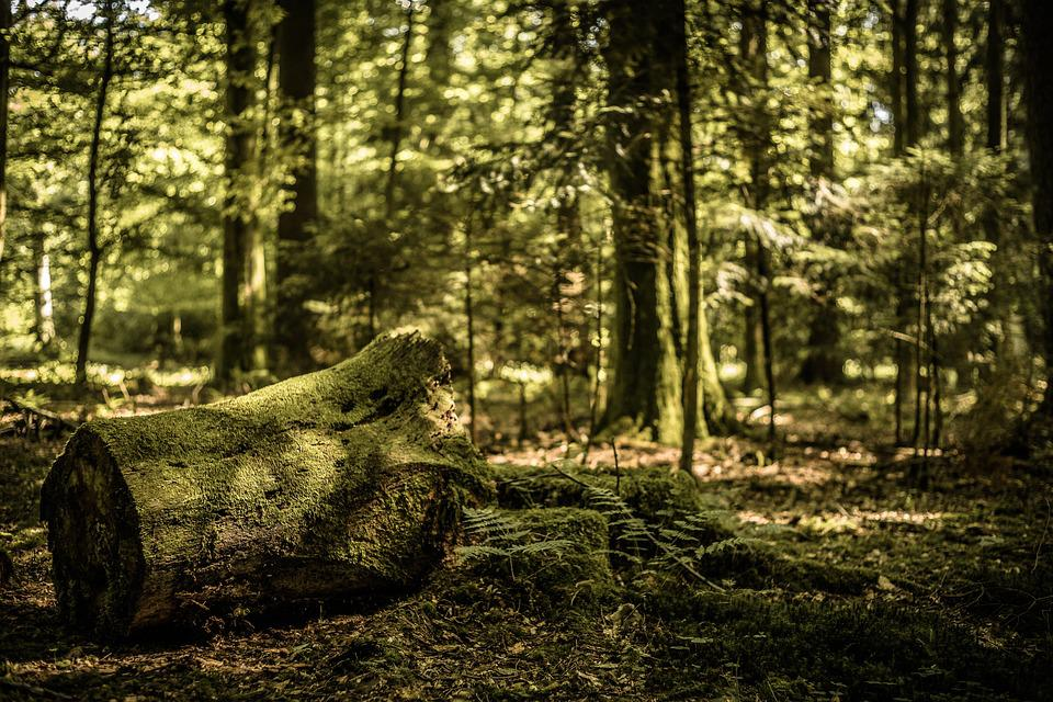 Forest, Nature, Mushroom, Autumn, Trees, Bach, Fog