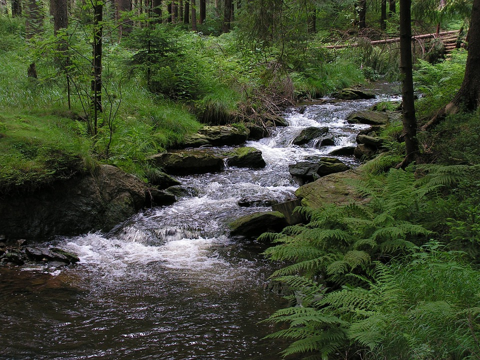 Bach, Forest, Geyer, Greifenbach, Germany, Nature