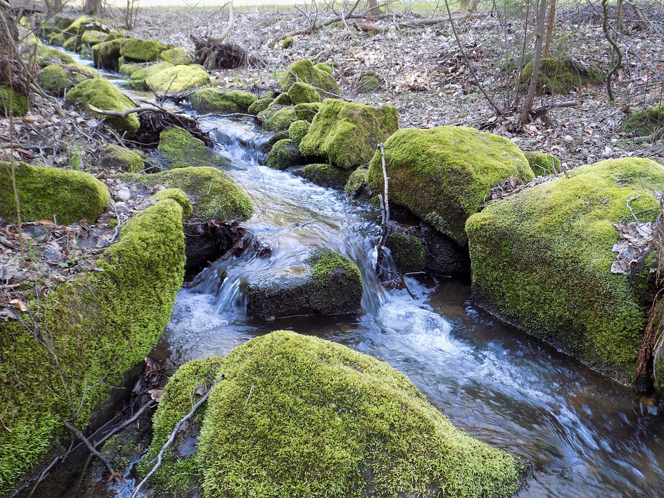 Bach, Forest, Nature, Water, Moss, Stones, Sun