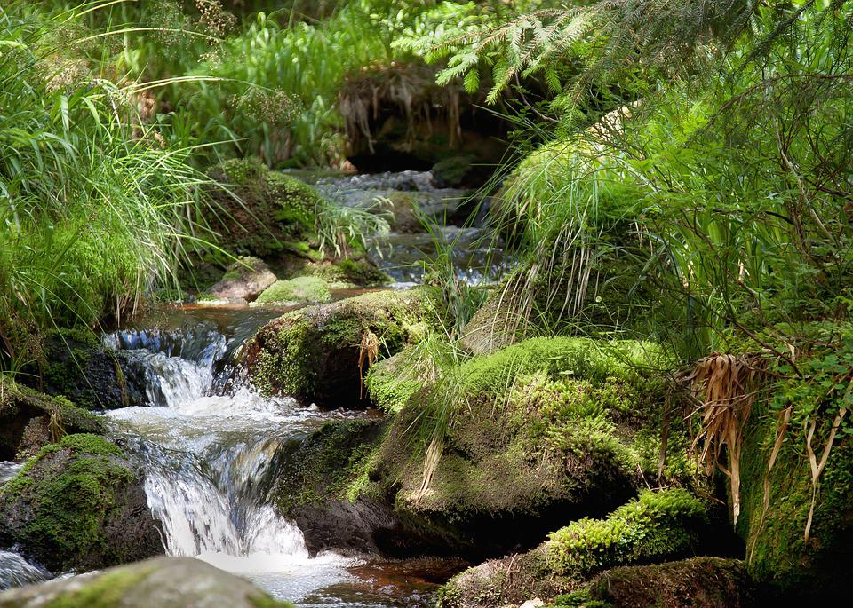 River, Waterfall, Bach, Forest, Nature, Water